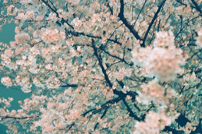 yagi_spring_w700
