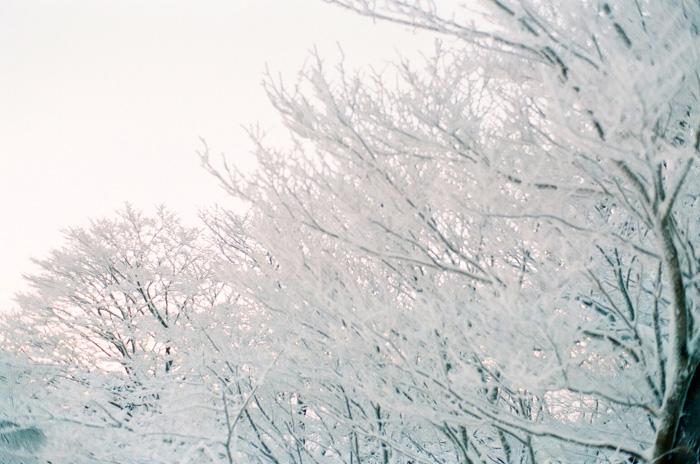 yagi_winter_w700